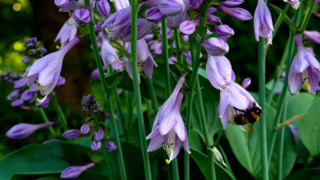 Flowers in spring. video