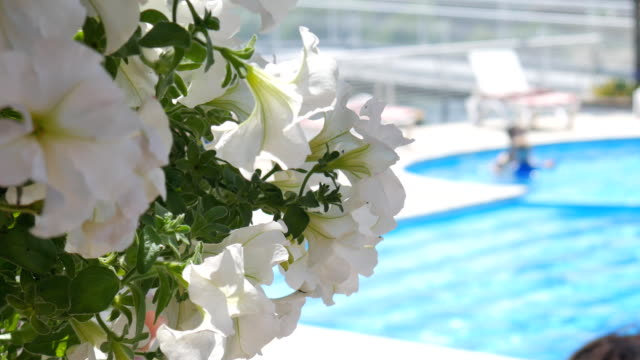vídeos de stock e filmes b-roll de flowers in the foreground. swimming in pool and smells white flower. sunbed lounger near the swimming pool. - mulher natureza flores e piscina