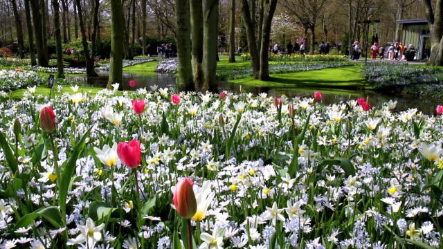 キューケンホフ公園で花ます。 - キューケンホフ公園点の映像素材/bロール