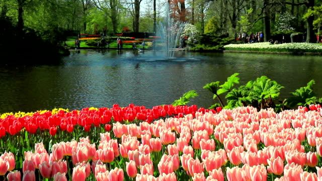 花公園のキューケンホフ - キューケンホフ公園点の映像素材/bロール