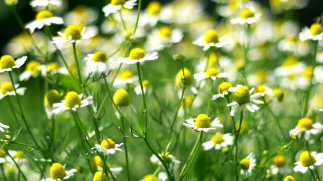 Flowers in the spring meadow