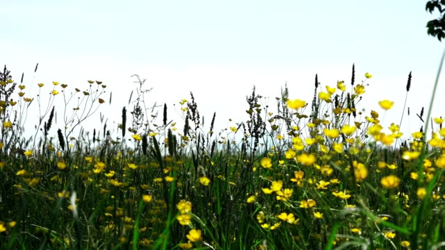 flowers meadow austria 01 flowers meadow austria blade of grass stock videos & royalty-free footage