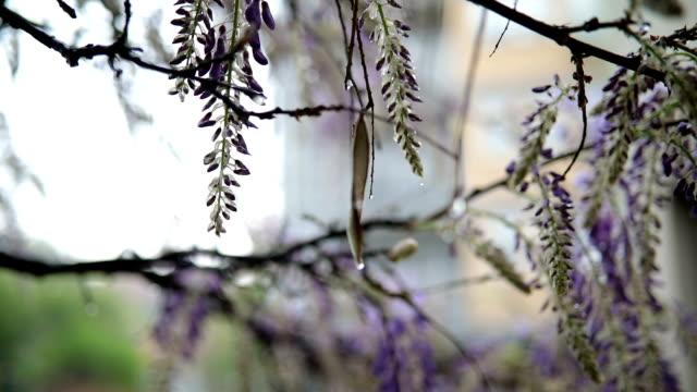 flowers on rain at springtime - terrazza video stock e b–roll