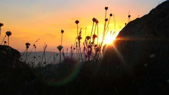 günbatımı gökyüzü boşaltmak ön plan üzerinde önünde çırpınan buharlarının çiçekler - alabama stok videoları ve detay görüntü çekimi