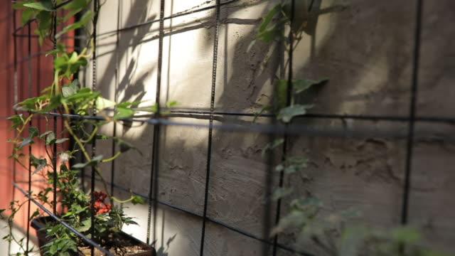 vídeos de stock e filmes b-roll de flowers on the wall - ivy building
