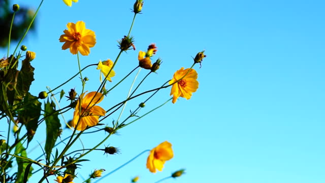 Flowers On The Wind.