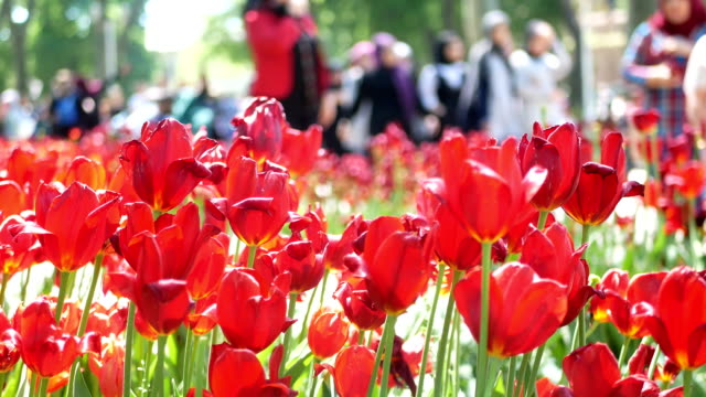 Flowers park walking people video