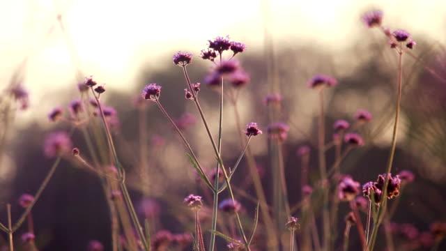 Flowers, Pollen float video