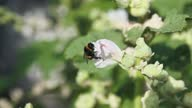 istock Flowers pollinated by bumblebee in garden. 1307449180