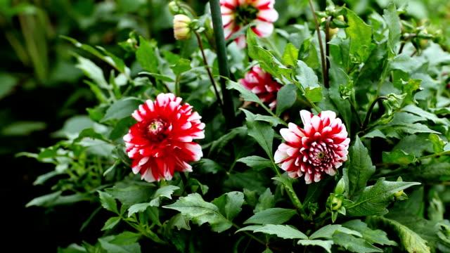 Flowers video