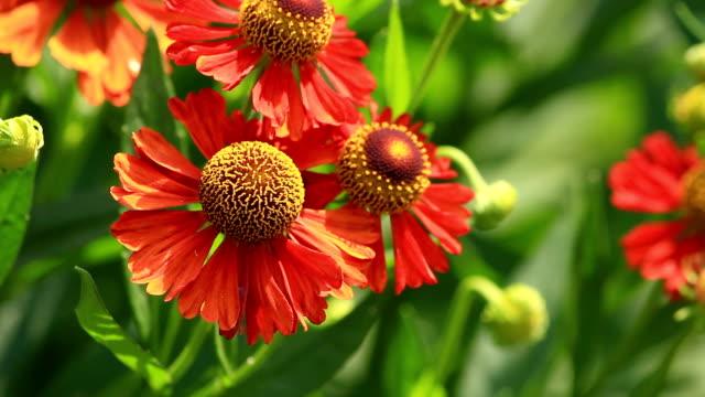 Blumen. – Video