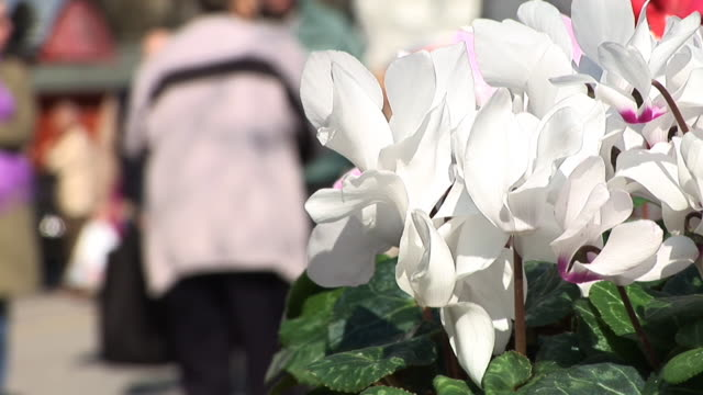 hd: flowers - blomstermarknad bildbanksvideor och videomaterial från bakom kulisserna