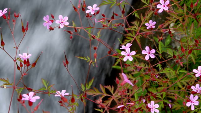 flowers with a fast stream in the background Flowers with a fast stream in the background. daylight savings stock videos & royalty-free footage