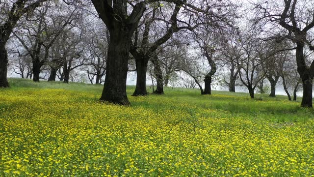 Flowery meadow with yellow spring flowers.