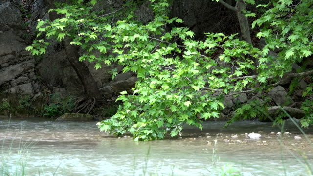 Flowing Clear Water in Forest Landscape video