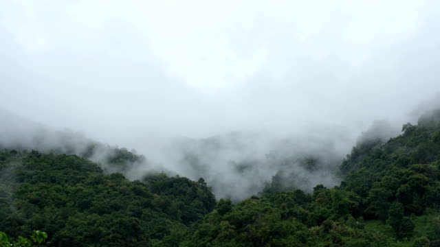 Flowing Cloud on the Mountain Forest video