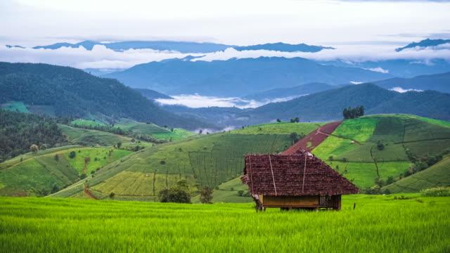 płynące chmury nad grzbietami górskimi z pięknymi zielonymi niełuskanymi na tarasie ryżowym w pa pong piang, chiang mai na północ od tajlandii - taras ryżowy filmów i materiałów b-roll