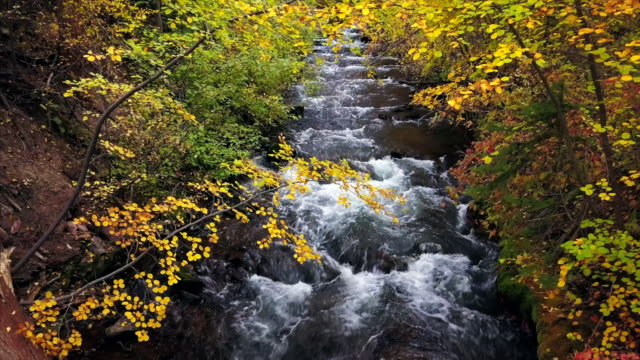 Flowing Mountain Creek in Fall