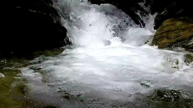 vídeos de stock, filmes e b-roll de câmera lenta de rio a fluir - lotus
