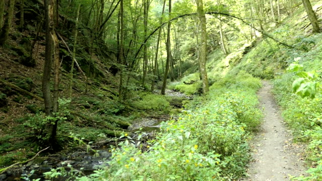 flowing stream Wilde Endert at Martental valley next to town Cochem at Mosel river (Germany). hiking through wild landscape. video