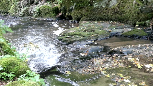 flowing stream Wilde Endert at Martental valley next to town Cochem at Mosel video