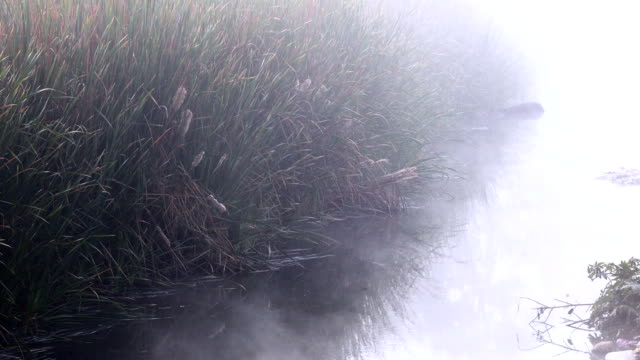 Flowing water during winter season