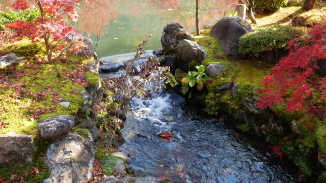 Flowing water steam in autumn fall