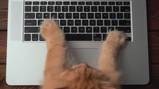 Fluffy cat paws typing buttons or texting message on laptop keyboard. Humor and fun concept of pet like office worker, top view video