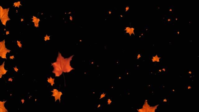 vídeos de stock, filmes e b-roll de uma onda de folhas de outono caindo no chão. folhas de outono loop fundo canal alfa - folha