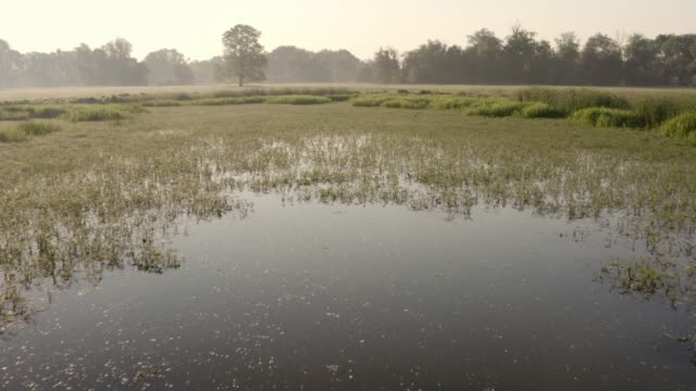 Fly above marsh with green water vegetation and wild bird floating on surface Fly above marsh with green water vegetation and wild bird floating on surface at sunrise. Summer nature scenery of wetland. marsh stock videos & royalty-free footage