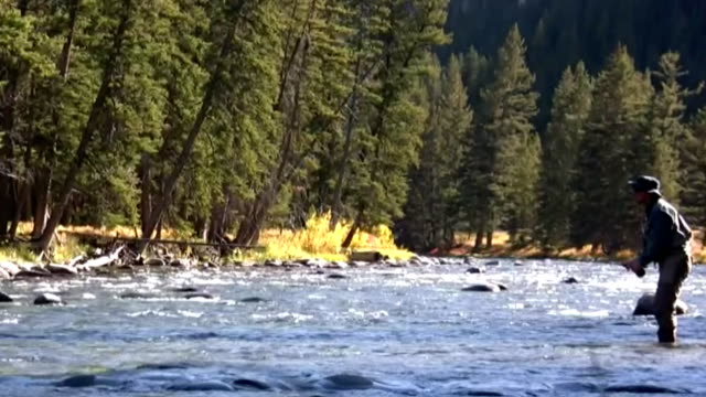 fly fishing the gallatin river - trout video stock e b–roll