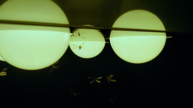 fly insect bulb lights video