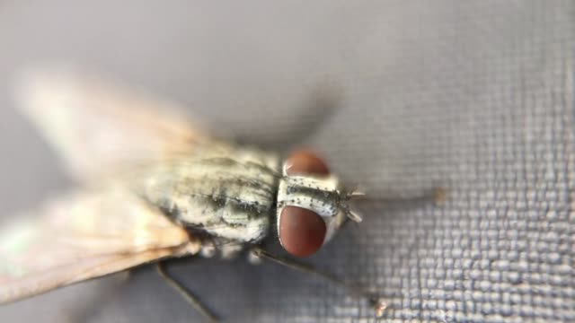 A Fly insect from a Macro view
