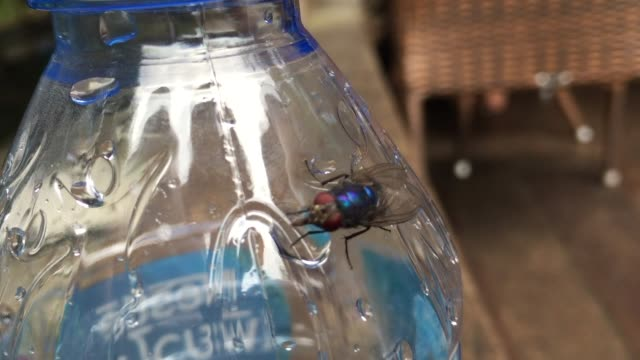 fly insect