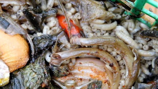 fly larvae, maggots - verfault stock-videos und b-roll-filmmaterial