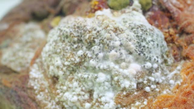 fly larvas auf peach 4 k - verfault stock-videos und b-roll-filmmaterial