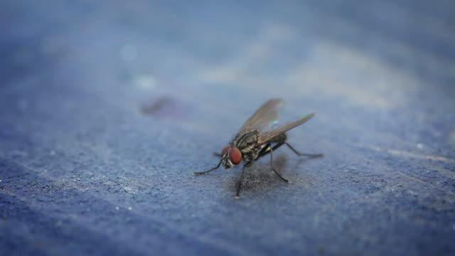 fly macro - sinek stok videoları ve detay görüntü çekimi