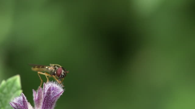 Fly on flower Macro shot of a fly sitting on a flower 笹 stock videos & royalty-free footage