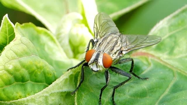 Fly on green leaf