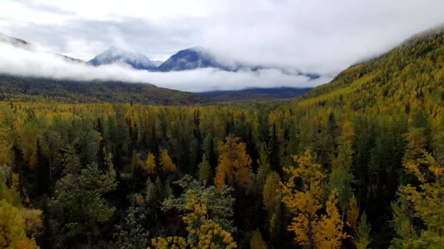 fly over autumn trees and mountain range in Alaska