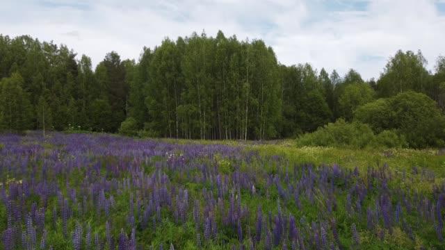 flyga över blommande blommor i sommarfält - vild blomma bildbanksvideor och videomaterial från bakom kulisserna