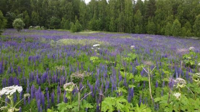 夏の畑で咲く花の上を飛ぶ ビデオ