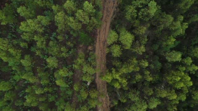 vídeos de stock, filmes e b-roll de voar sobre a vista superior da floresta tropical verde - bétula