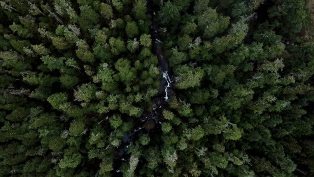 yemyeşil eski büyüme yağmur ormanları üzerinde uçmak, merkezi b.c., kanada. - bakir yer stok videoları ve detay görüntü çekimi