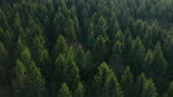 istock Fly over the colourful trees in a wood. Tops of a fir trees. 1225189918