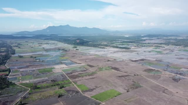 Fly over the paddy field at Kuala Muda Fly over the paddy field at Kuala Muda, Kedah, Malaysia. agricultural occupation stock videos & royalty-free footage