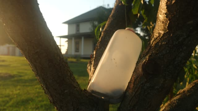 Fly trap on a fruit tree video
