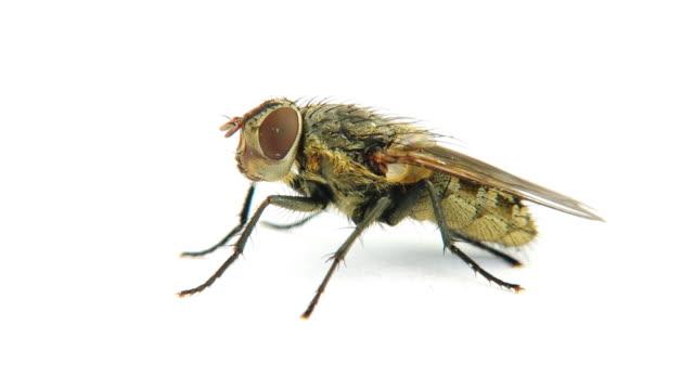 fly - sinek stok videoları ve detay görüntü çekimi