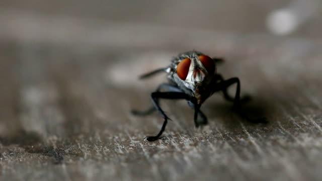 Fly (Estacione y Vuele) - vídeo