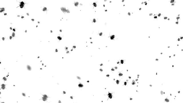 Fly (Endlos wiederholbar – Video
